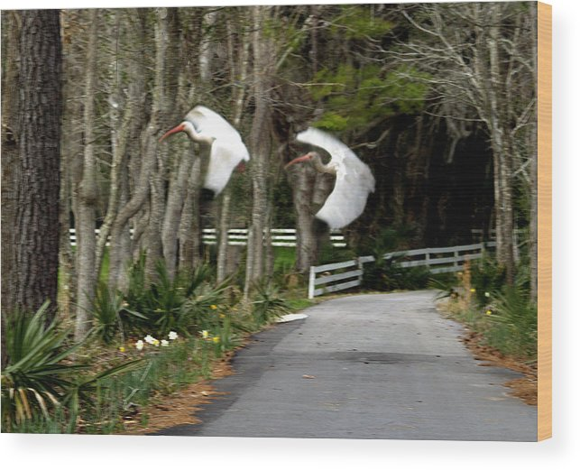 Birds Wood Print featuring the photograph Fly Fly Away by Diane Wallace