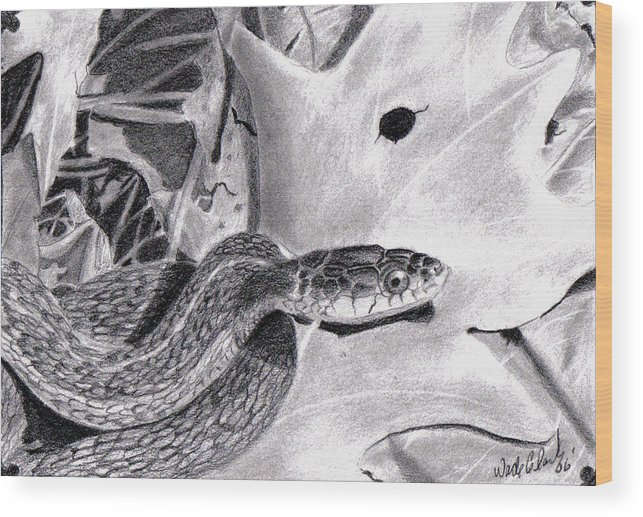 Animals Wood Print featuring the drawing Garter Snake by Wade Clark