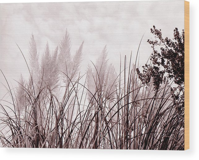 Grass Wood Print featuring the photograph Grasses by Katherine Huck Fernie Howard