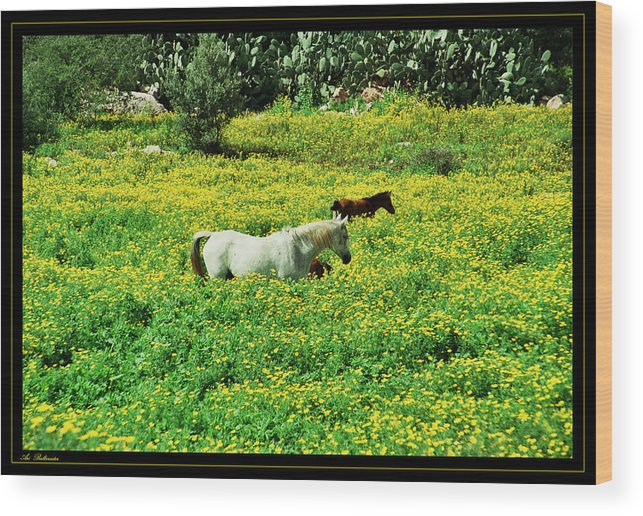 Horses Wood Print featuring the photograph Horses by Arik Baltinester