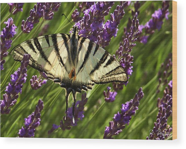France Wood Print featuring the photograph In The Lavender by Joe Bonita