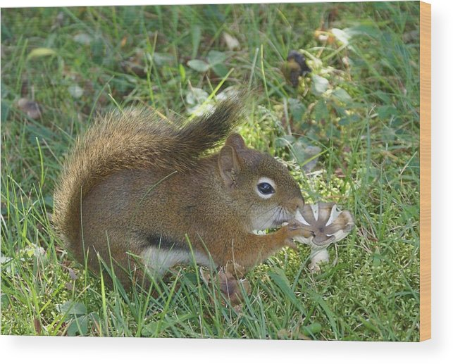 Chipmunk Wood Print featuring the photograph Lunch Time by Lisa Hebert