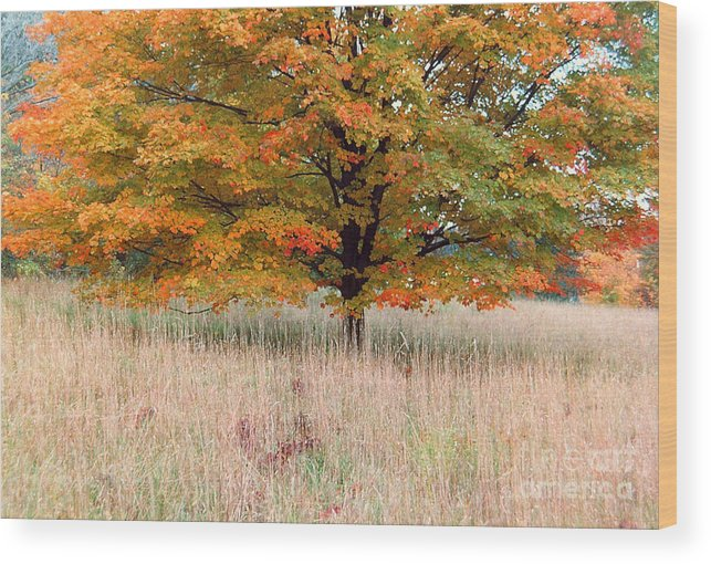 Autumn Wood Print featuring the photograph Maple And Tall Grass by Andrew Kazmierski