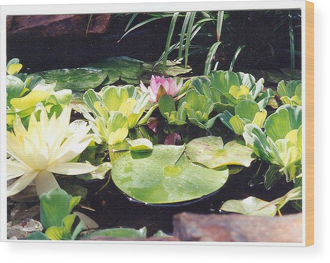 Waterlillies Wood Print featuring the photograph Morning Pond by Laura Johnson