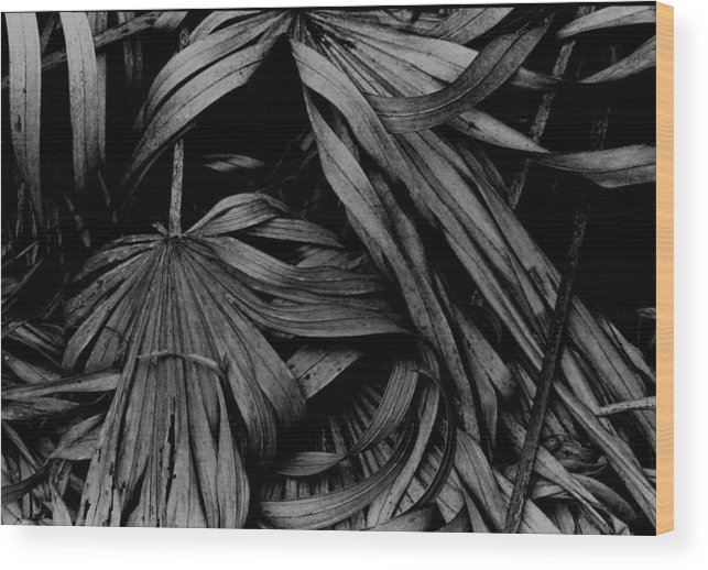Florida Landscape Wood Print featuring the photograph Palms by Michael L Kimble