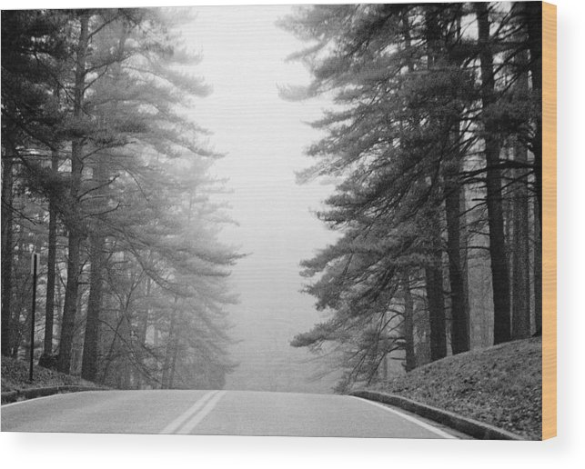 Pines Wood Print featuring the photograph Pine Mist by Paul Trunk