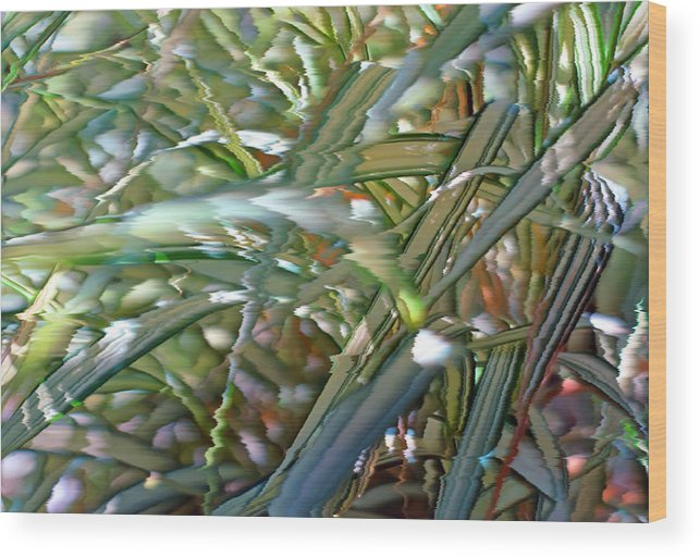 Grass Wood Print featuring the photograph Ribbon Grass 3 by Steve Ohlsen