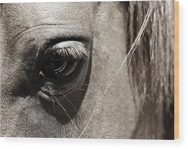 Americana Wood Print featuring the photograph Stillness In The Eye Of A Horse by Marilyn Hunt