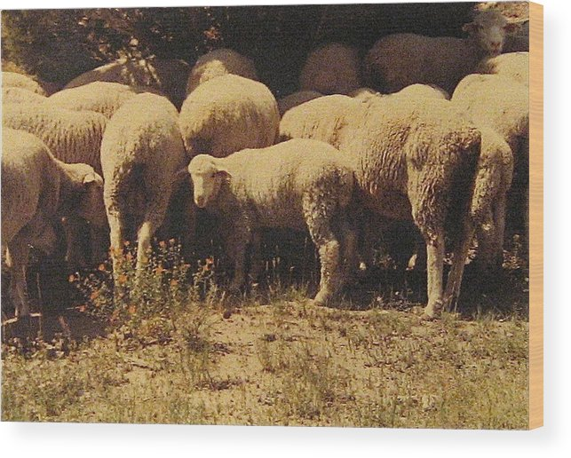 Art Wood Print featuring the photograph Sheep by Stephen Hawks