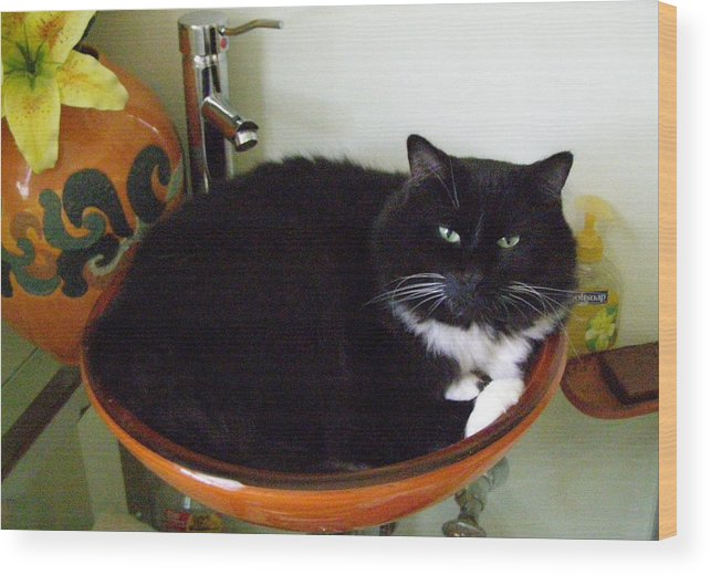 Animal Wood Print featuring the photograph Smokey In Wash Bowl by Jeanette Oberholtzer