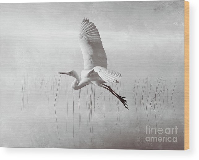 White Egret Wood Print featuring the photograph Snowy Egret Morning Bw by Laura D Young
