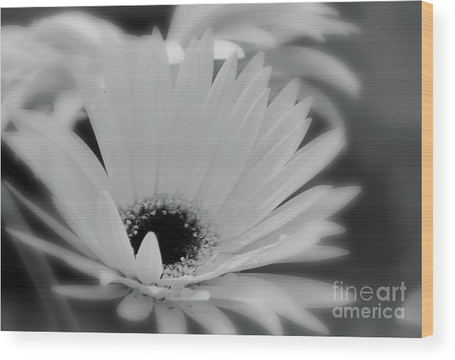 Flower Wood Print featuring the photograph Soft Spring by Sheila Ping