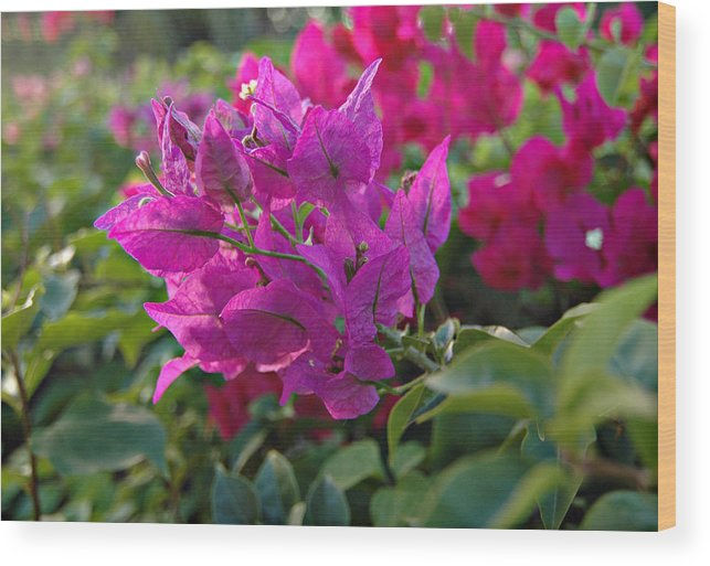 St Lucia Floral Wood Print featuring the photograph St Lucia Floral by J R Baldini