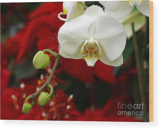 Orchid Wood Print featuring the photograph Sunday Afternoon Orchid by Steve Augustin
