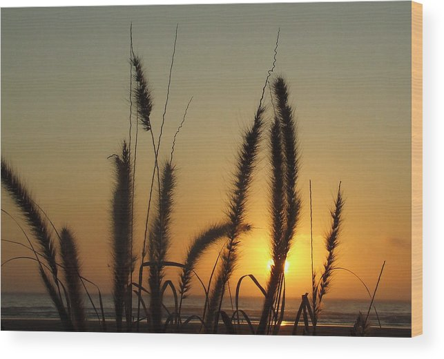 Sunset Wood Print featuring the photograph Sunset At Cannon Beach by Everett Bowers