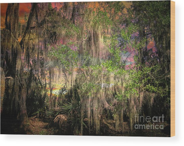 Louisiana Swamp Wood Print featuring the photograph Swamp 2 by Larry White