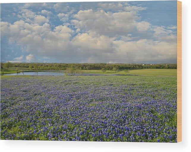 Tx Wood Print featuring the photograph Texas Bluebonnet Bliss by Lynn Bauer