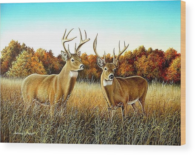 Deer Wood Print featuring the painting The Boys by Anthony J Padgett