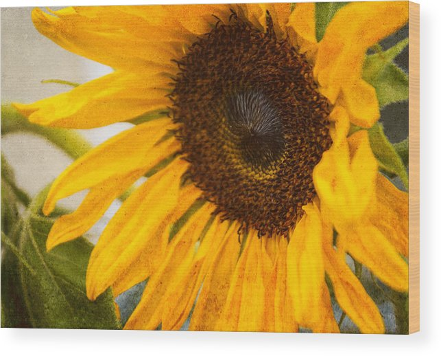 Sunflower Wood Print featuring the photograph Thoughts Of Autumn by Arlene Carmel
