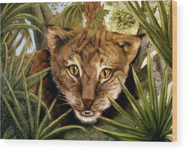 Bobcat Wood Print featuring the painting Watching Floridabobcat by Darlene Green