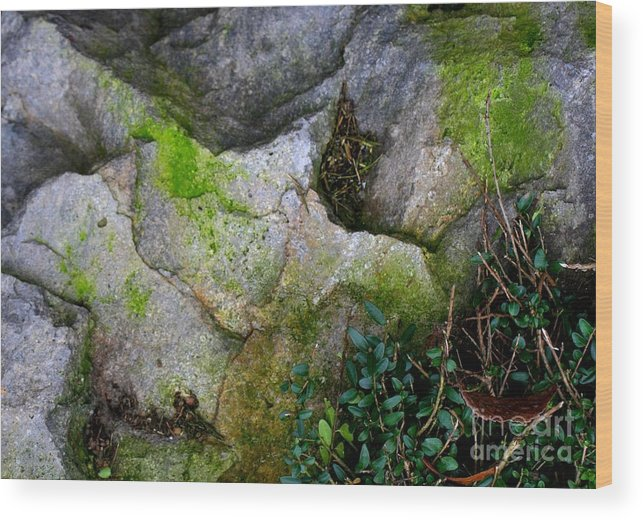 Rocks Wood Print featuring the photograph Winter Rock Patterns by Valia Bradshaw