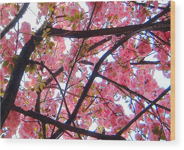 Cherry Blossoms Wood Print featuring the digital art Blossoms And Bark by Barbara Hammond