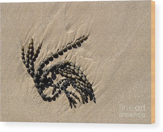Australia Wood Print featuring the photograph Seaweed On Beach by Steven Ralser