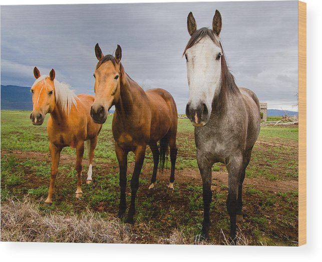 Mammal Wood Print featuring the photograph 3 Horses by Jean Noren