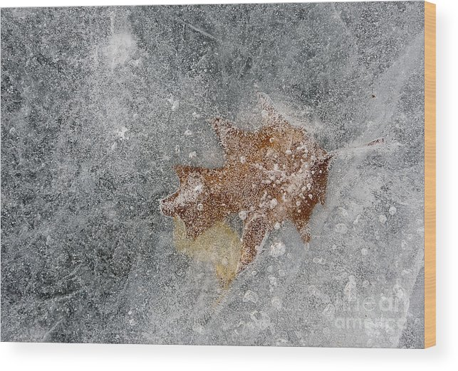 Ice Wood Print featuring the photograph Leaves In Ice by Steven Ralser