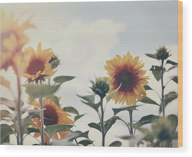 Sunflowers Wood Print featuring the photograph Minimal Sunflowers Against Blue Sky In Autumn by Elle Moss