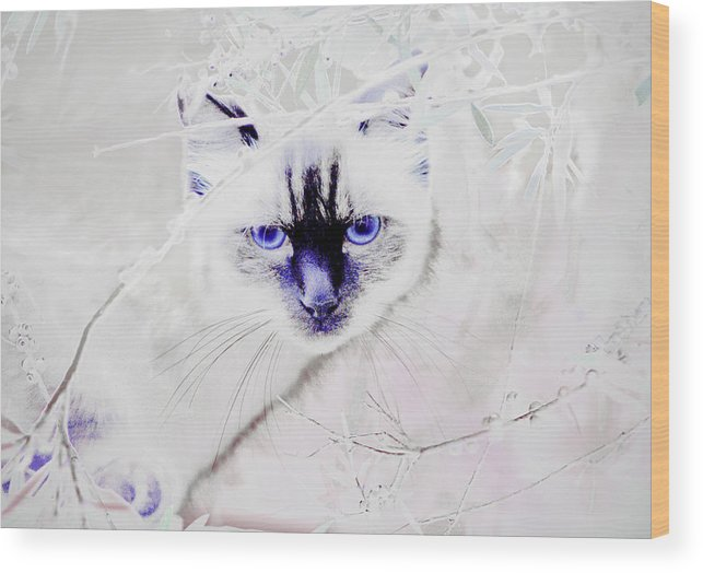 Animals Wood Print featuring the photograph Spellbound by Holly Kempe