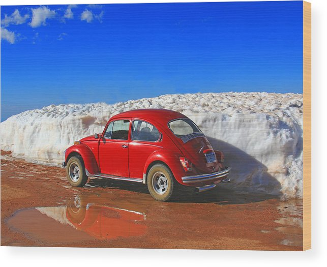 Snow Wood Print featuring the photograph The Little Bug That Could by Greg Brown