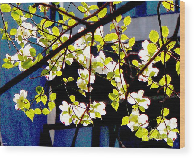 Blossoms Wood Print featuring the photograph Dogwood Blossoms by Ulrich Lange