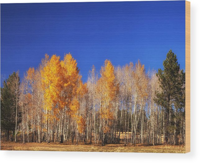 Landscape Wood Print featuring the photograph End Of Autumn by James Bethanis