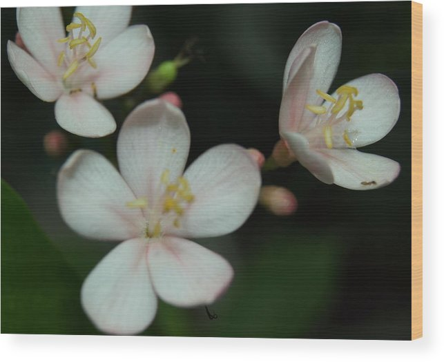 Wood Print featuring the photograph Flowers by Gornganogphatchara Kalapun