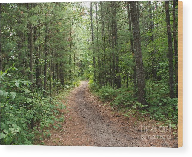 Huron National Forest Wood Print featuring the photograph Scenic Walk by Grace Grogan