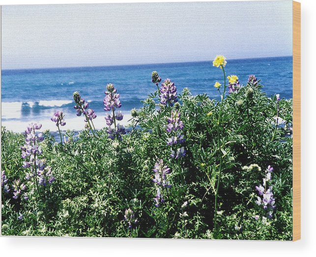 Seascape Wood Print featuring the photograph A Different Point Of View by Maggie Cruser