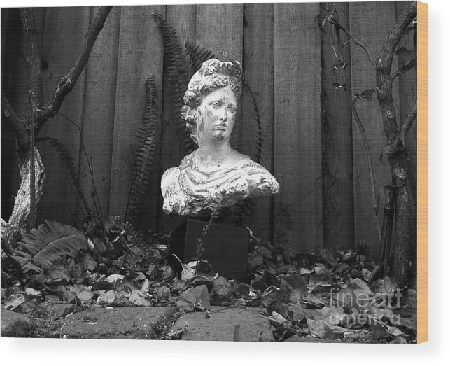 Apollo Wood Print featuring the photograph Apollo In The Backyard by David Lee Thompson