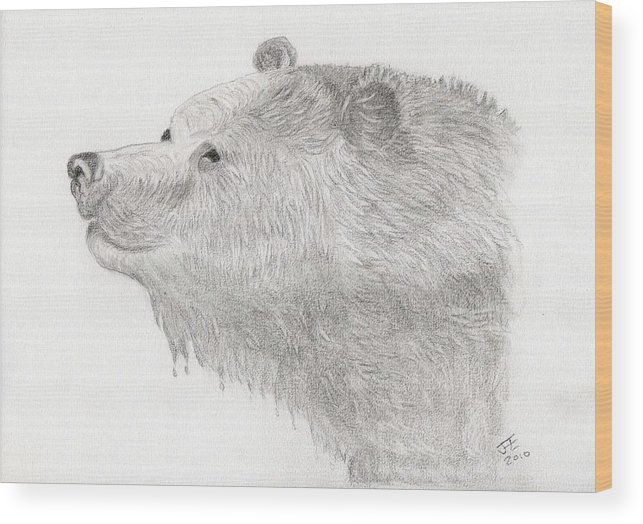 Black And White Sketch Wood Print featuring the drawing Bear In Water by Jacqueline Essex