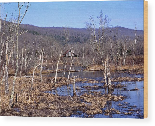 Wood Print featuring the photograph Boxely Swamp2 by Curtis J Neeley Jr