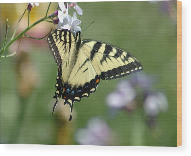 Butterfly Wood Print featuring the photograph Delicate Balance by Linda Murphy