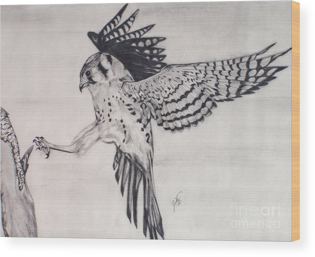Hawk Wood Print featuring the drawing Falcon I by Suzette Kallen