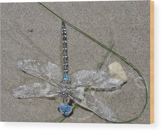 Dragonfly Wood Print featuring the photograph Dragonfly On The Beach by Liz Vernand