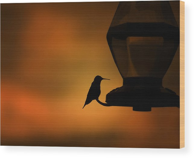 Hummingbird Wood Print featuring the photograph Hummingbird After The Storm by Al Mueller