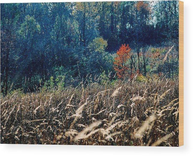 Landscape Wood Print featuring the photograph Prairie Edge by Steve Karol