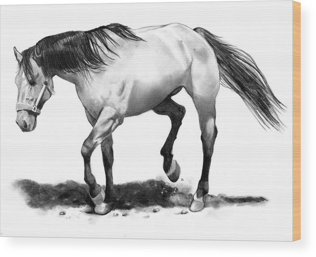 Horse Wood Print featuring the drawing The Stallion by Joyce Geleynse
