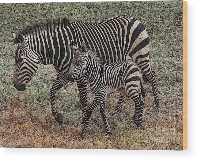 Zebra Wood Print featuring the photograph Two Of A Kind by David Carter