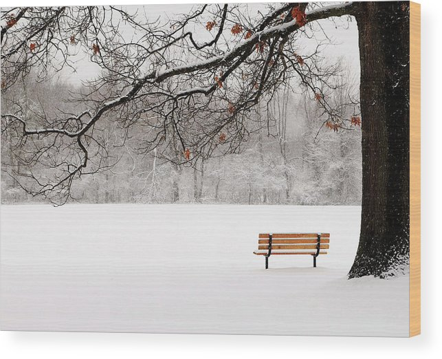 Mendon Wood Print featuring the photograph Under The Oak by Kelly Lucero