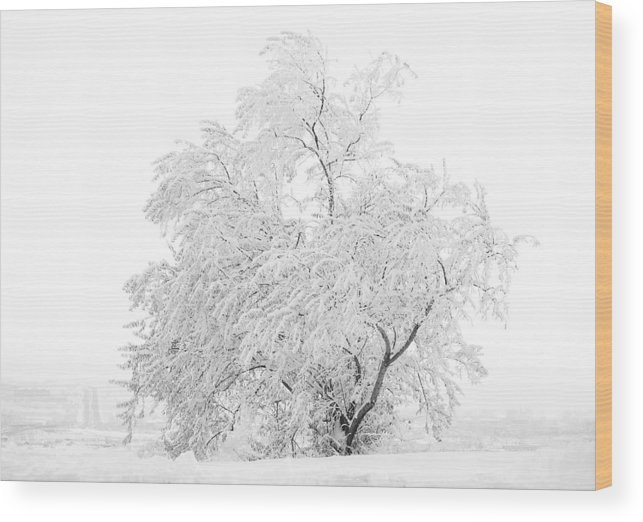 Snow Wood Print featuring the photograph White On White by Marilyn Hunt