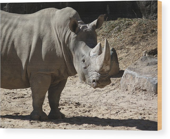 Maryland Wood Print featuring the photograph White Rhino by Ronald Reid